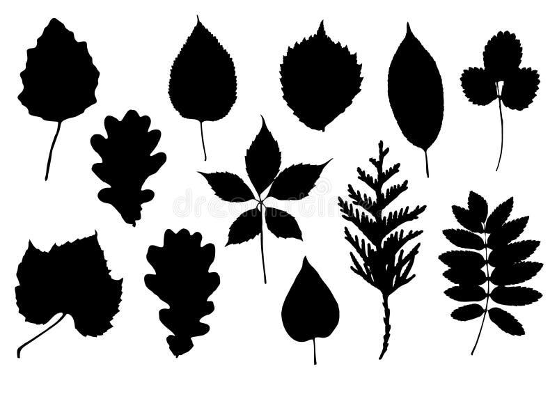 силуэты листьев иллюстрация штока