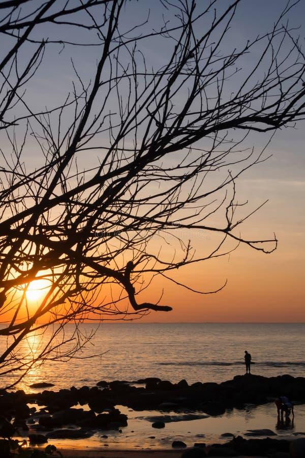 Силуэты мертвых деревьев на пляже и красочных небесах на предпосылке захода солнца стоковое фото rf