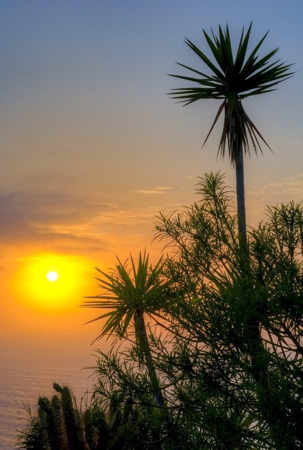 Силуэты на заходе солнца, Puerto de Ла Cruz ладони, Тенерифе, Канарские острова, Испания стоковые фото