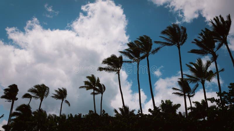 Силуэты пальм и голубое фоновое изображение облачного неба стоковая фотография