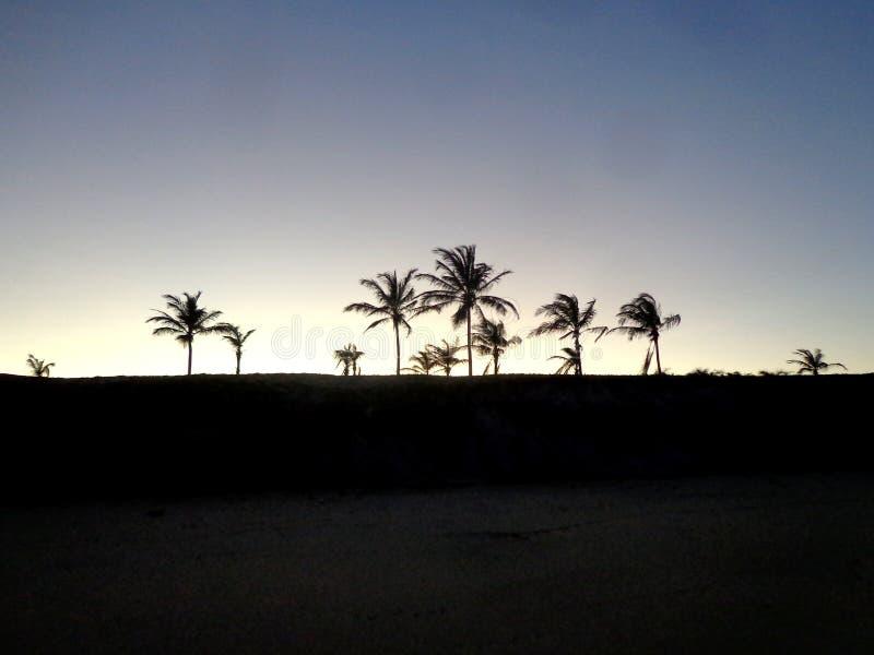 Силуэты пальм на пляже стоковые фото