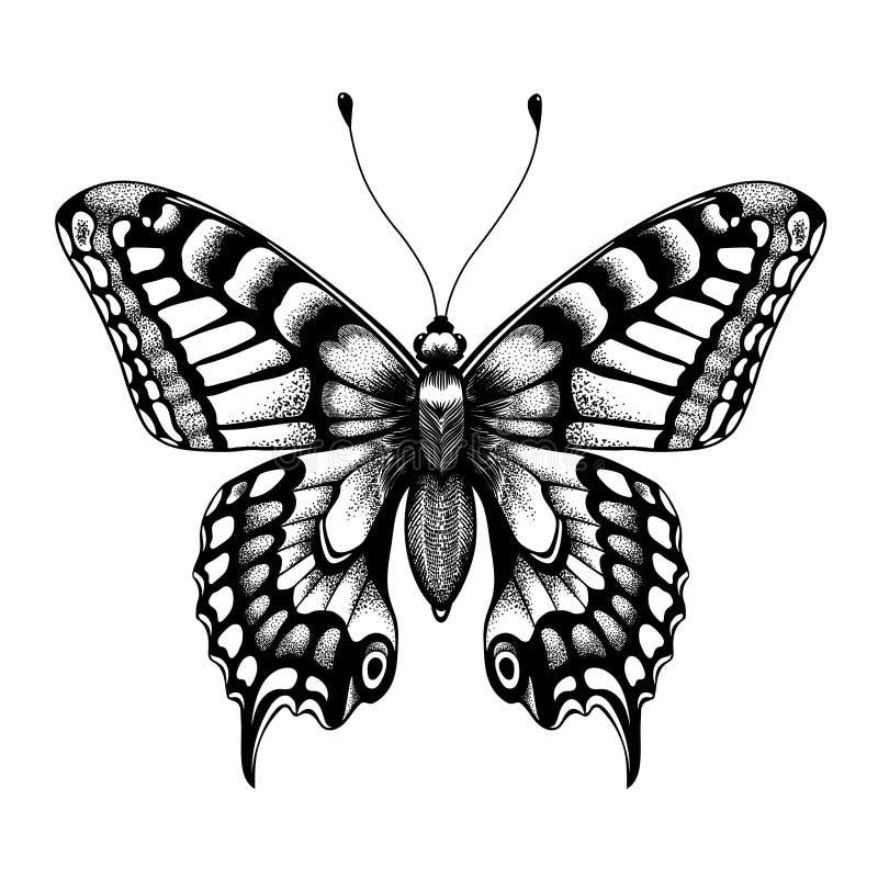 Силуэт бабочки Бабочка татуировки Изолированный эскиз вектора бабочки иллюстрация вектора