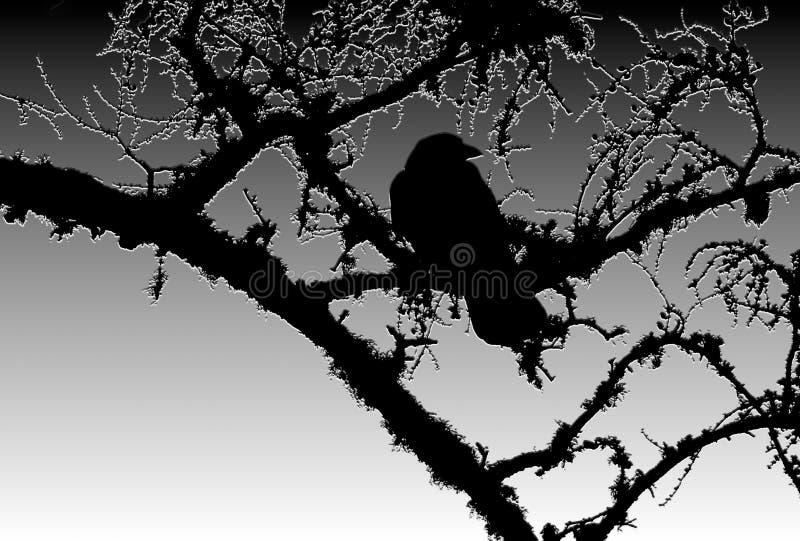 Силуэт вороны в мертвом дереве вяза стоковое фото