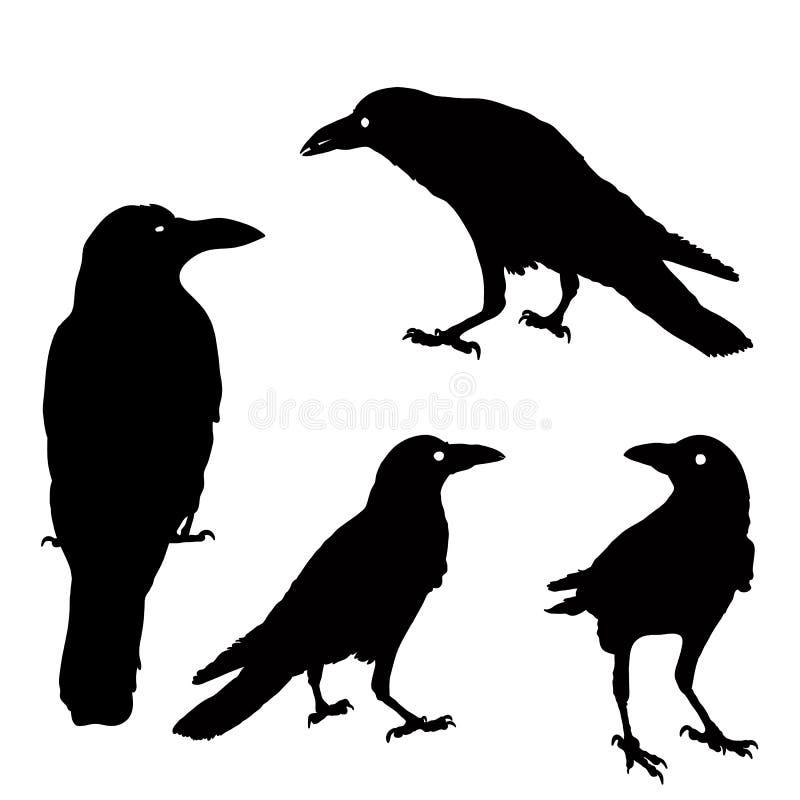 Силуэт вороны в различных положениях иллюстрация черные вороны на сером цвете изолировано иллюстрация грачонка бесплатная иллюстрация