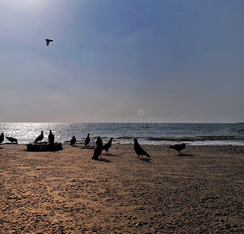 Силуэт голубей на пляже моря во время времени дня с солнечным светом отражая в воде стоковое изображение rf