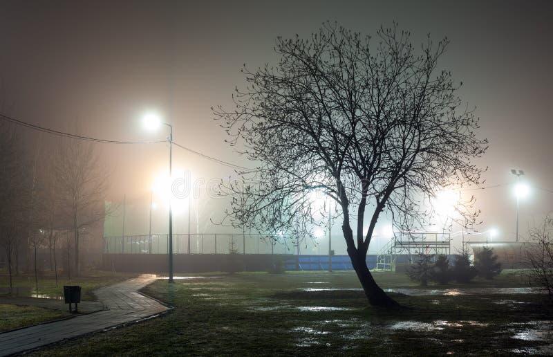 Силуэт дерева без листвы против предпосылки тумана стоковая фотография rf