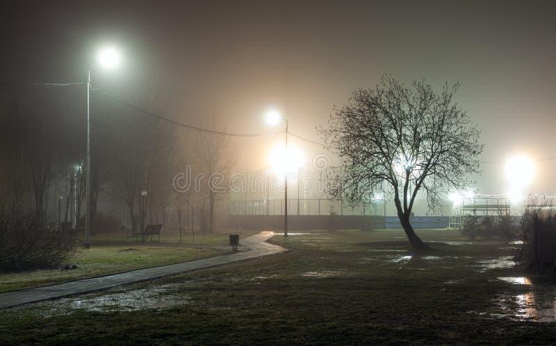 Силуэт дерева без листвы против предпосылки тумана стоковое фото