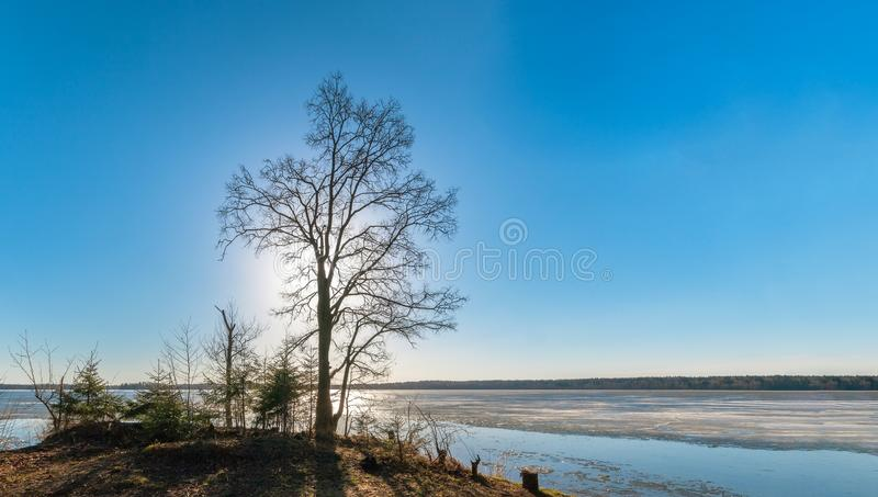 Силуэт дерева без листвы стоковое фото