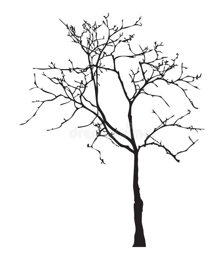 Силуэт дерева, без листьев, черное изолированных на белой предпосылке, иллюстрации вектора иллюстрация штока