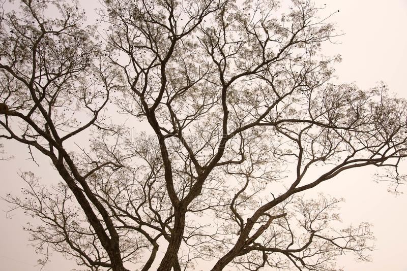 Силуэт дерева в утре тумана стоковые фото