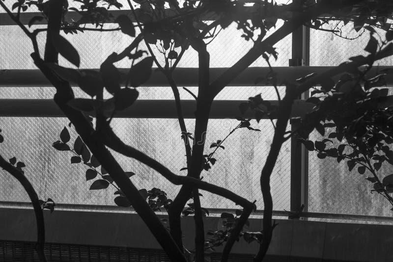 Силуэт дерева против солнечного окна стоковое изображение rf