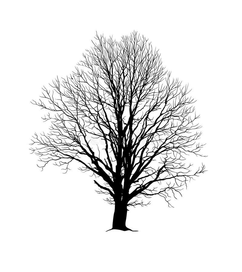 Силуэт дуба реалистический без листвы иллюстрация вектора