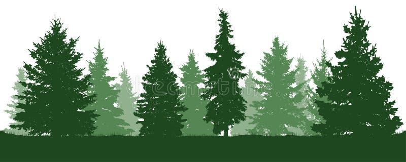 Силуэт елей леса Coniferous спрус зеленого цвета Вектор на белой предпосылке иллюстрация штока