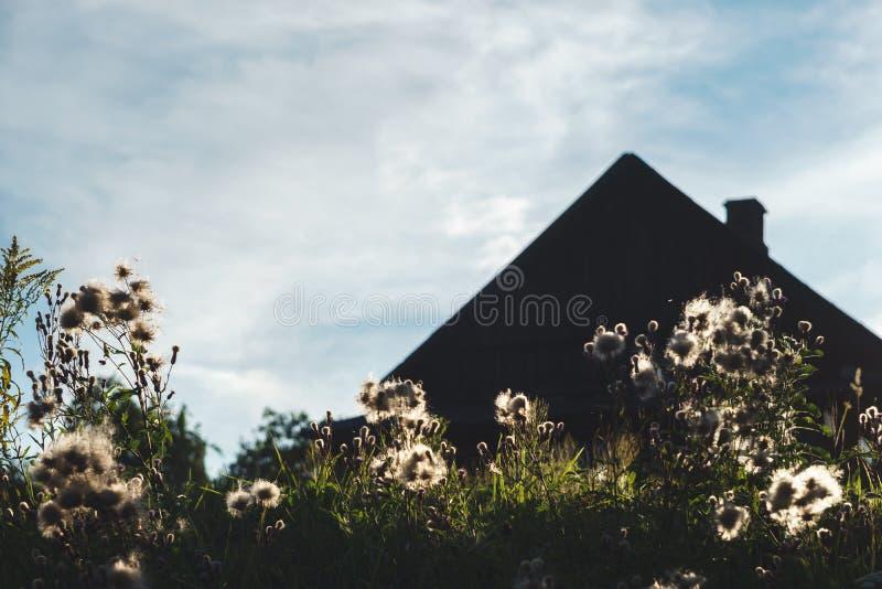 Силуэт загородного дома с камином за пушистыми белыми полевыми цветками снятыми против света захода солнца на облачном небе стоковое изображение