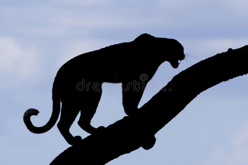 Силуэт леопарда стоковое изображение rf