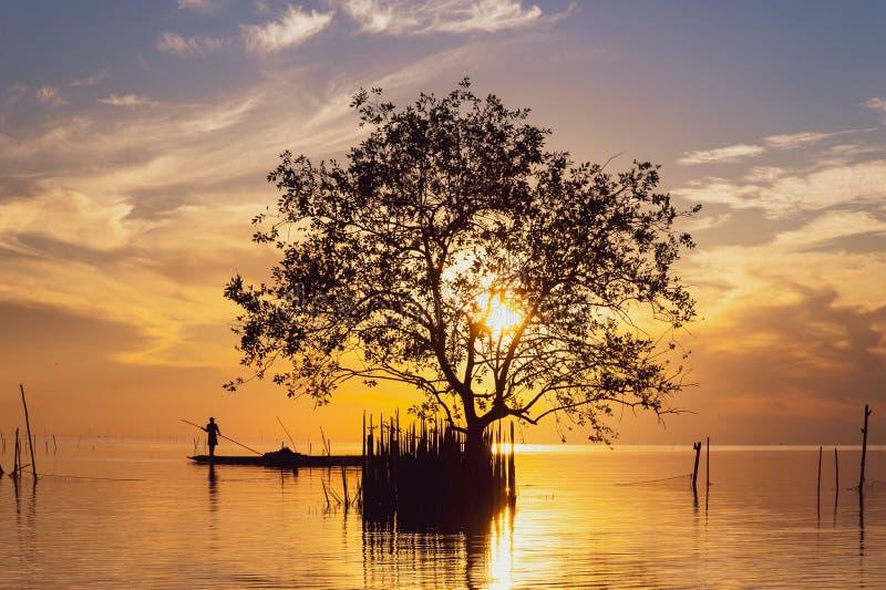 Силуэт мангрового дерева и рыбака в рыболовной лодке на рассвете над оРстоковое изображение