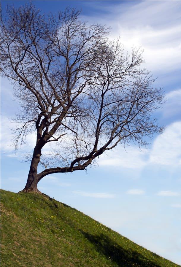 Силуэт одиночного дерева без листьев на верхней части холма, gree стоковая фотография