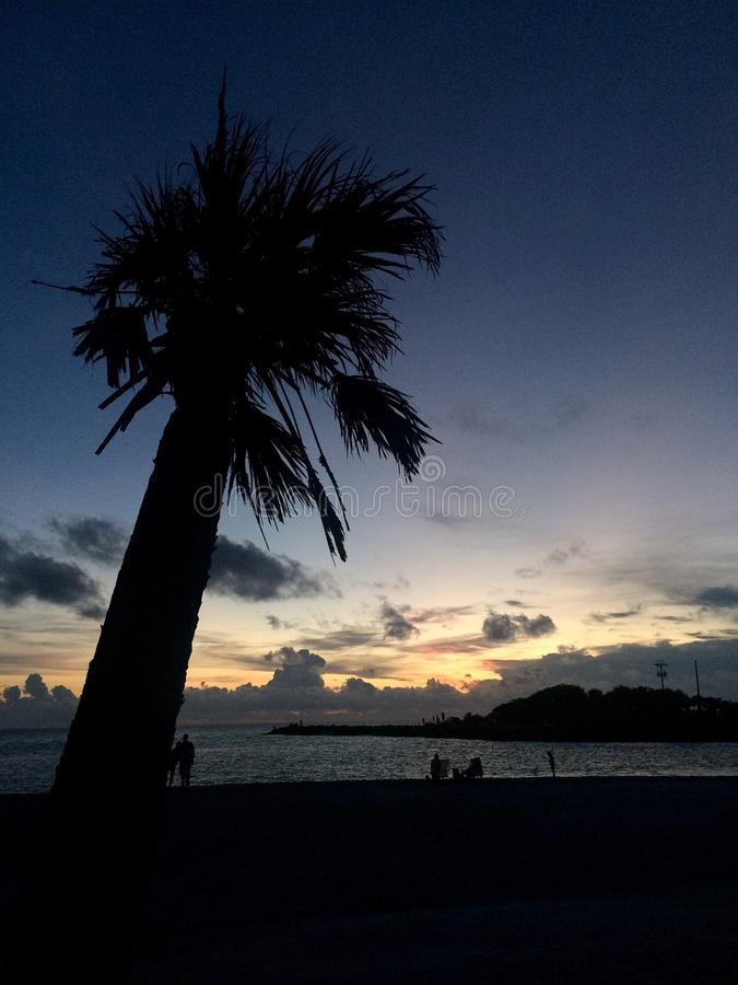 Силуэт пальмы на сумерк стоковое фото rf