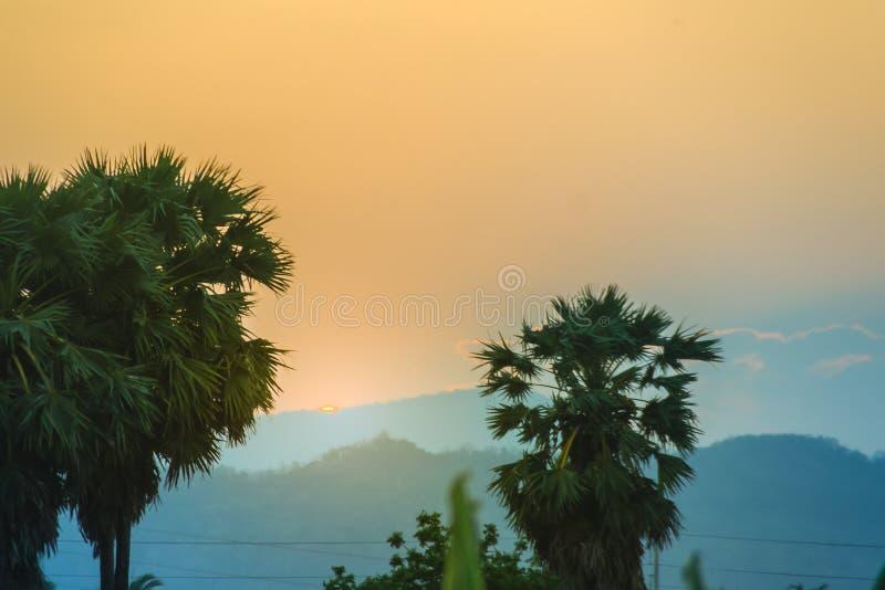 Силуэт пальм сахара после захода солнца, с красочным небом a стоковое изображение rf