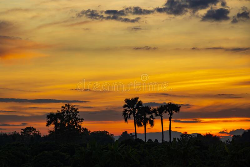 Силуэт пальм сахара после захода солнца стоковая фотография
