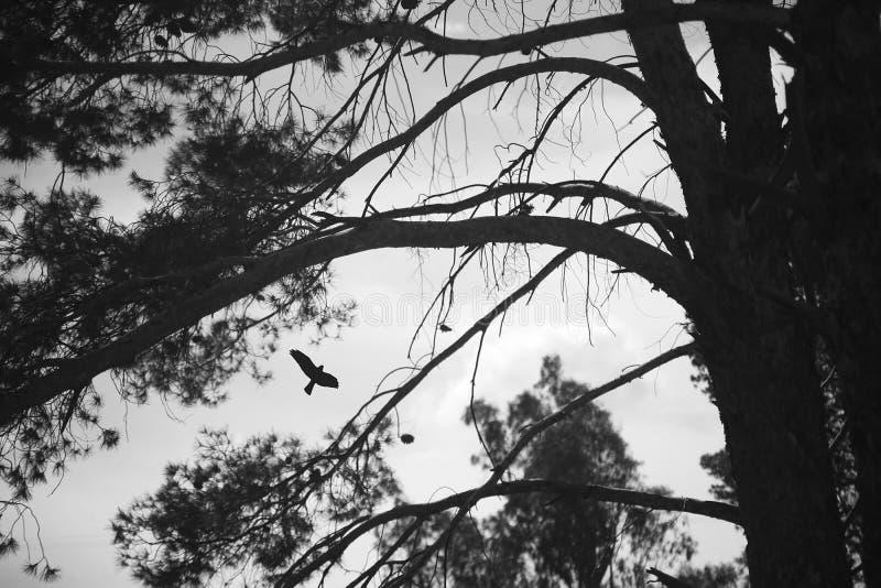 Силуэт птицы и вала стоковое изображение