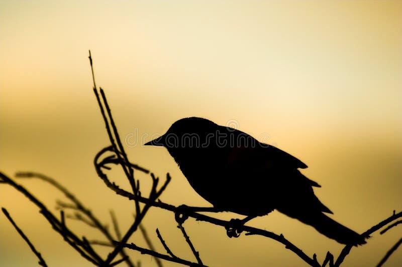 силуэт птицы стоковое изображение rf