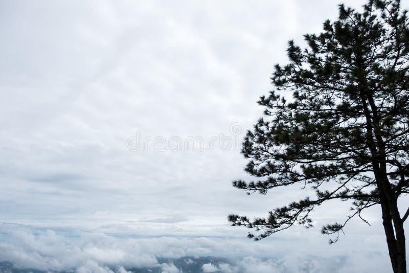 Силуэт сосны на верхней части высокой горы стоковые фотографии rf