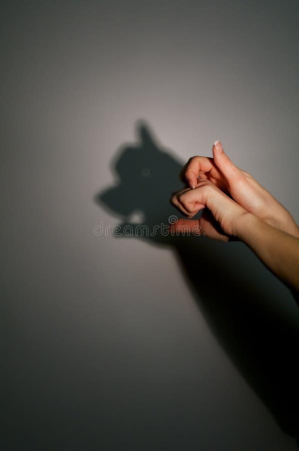 силуэт тени свиньи стоковое изображение rf