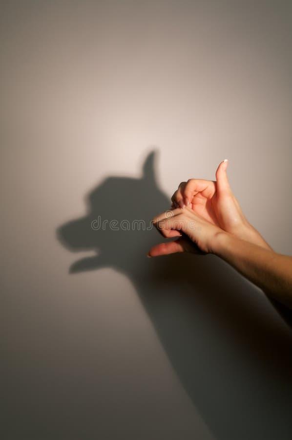 силуэт тени собаки стоковые фотографии rf