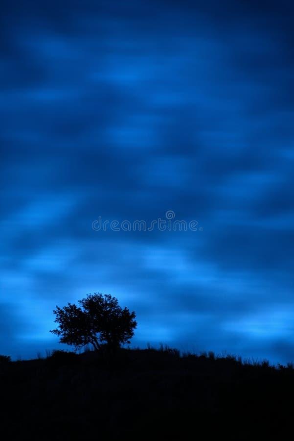 Силуэт уединённого дерева на холме после сумрака выдержка длиной стоковая фотография rf