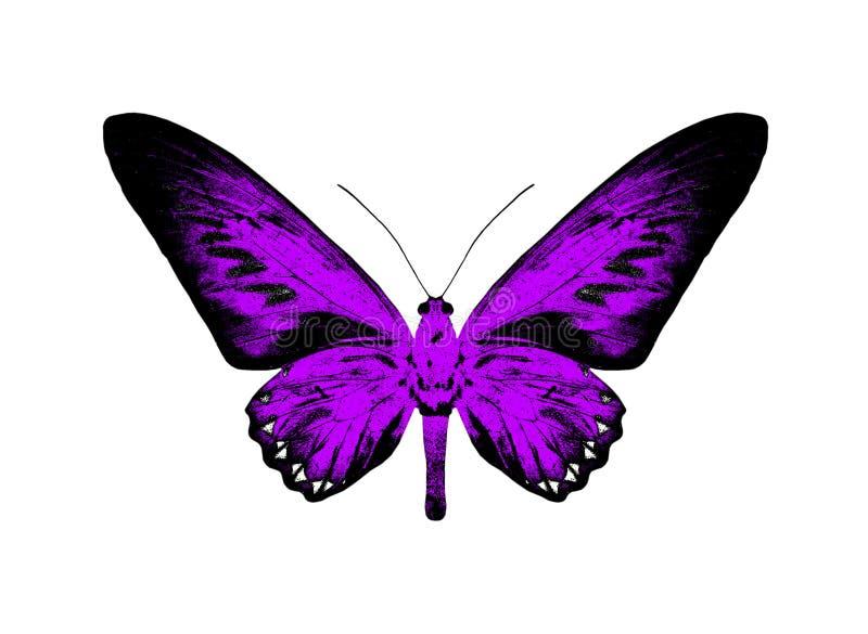 Силуэт фиолетовой бабочки изолированной на белой предпосылке иллюстрация штока
