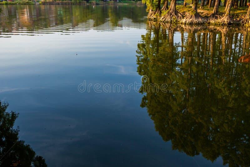 Силуэт Lanscape деревьев в озере леса на солнце стоковое фото