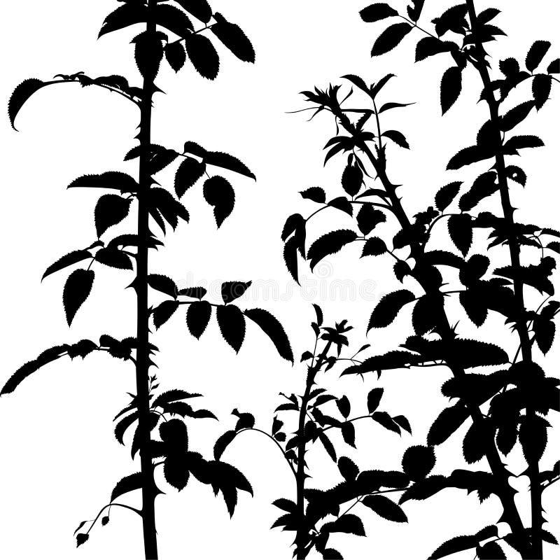 силуэт shrub бесплатная иллюстрация