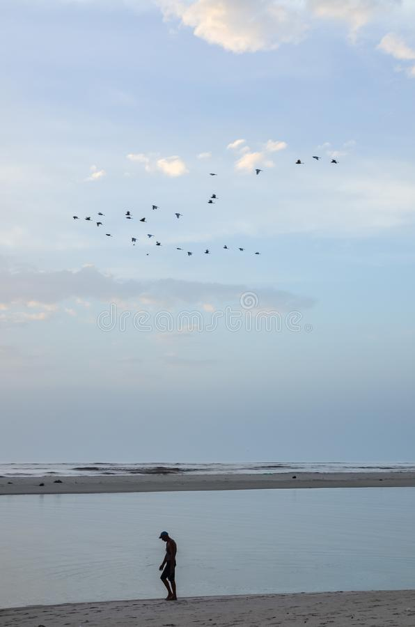 Силуэт unidentifieable человека идя вдоль пляжа во время рассвета с спокойным океаном и летящими птицами стоковые фотографии rf