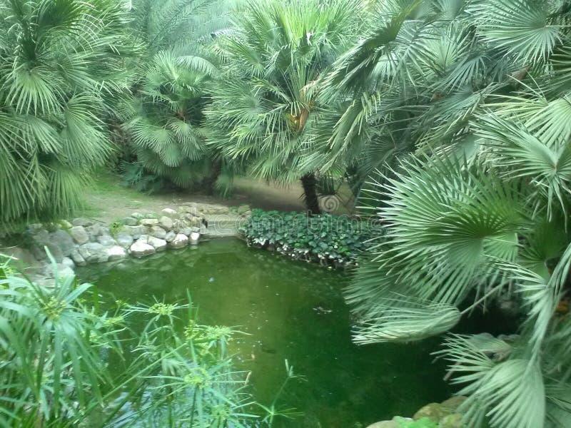 Сильное зеленое дерево стоковая фотография rf