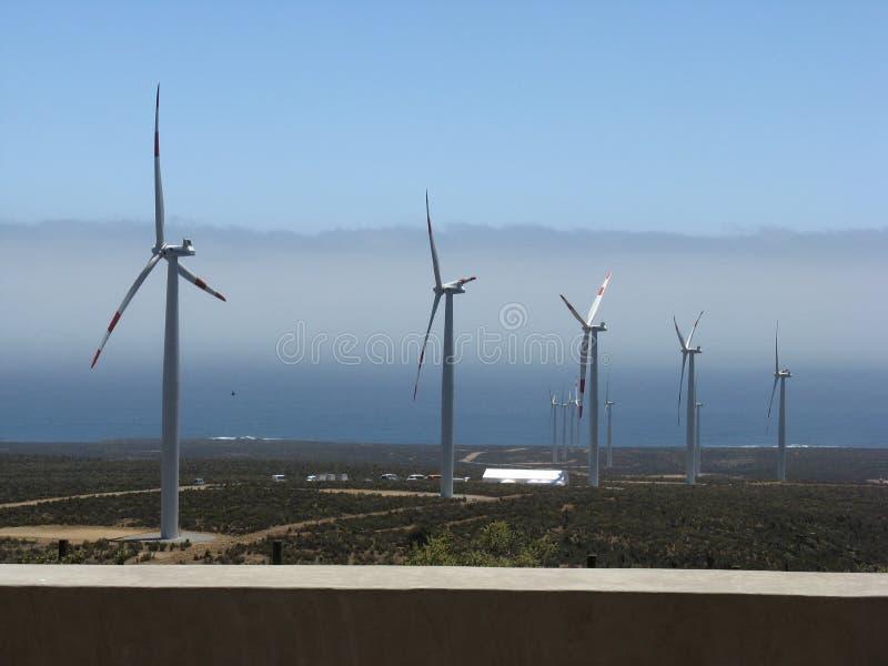 сильный ветер стоковое изображение rf