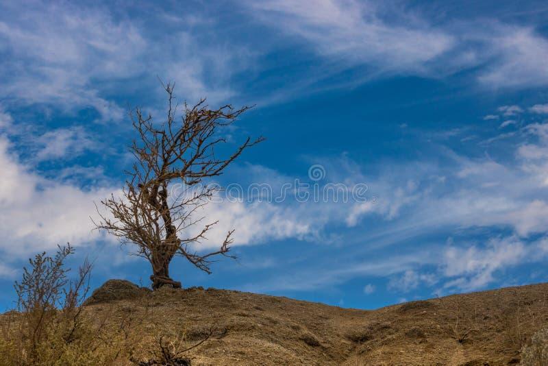 Сильный скелетный силуэт дерева поражая против темносинего неба пустыни с белыми облаками садился на насест вверху холмы стоковые изображения