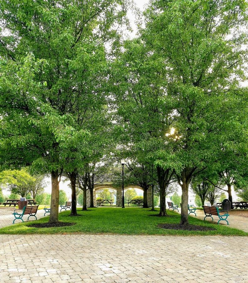 Симметричные деревья стоковое изображение