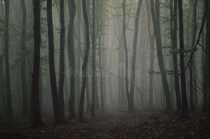 Симметричные деревья в загадочном лесе на ноче хеллоуина стоковая фотография