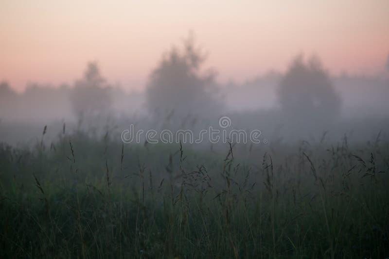 3 симметричных силуэта деревьев в туманном поле во время ночи лета fog стоковая фотография rf