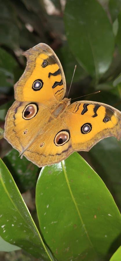 Симпатичная бабочка стоковое изображение