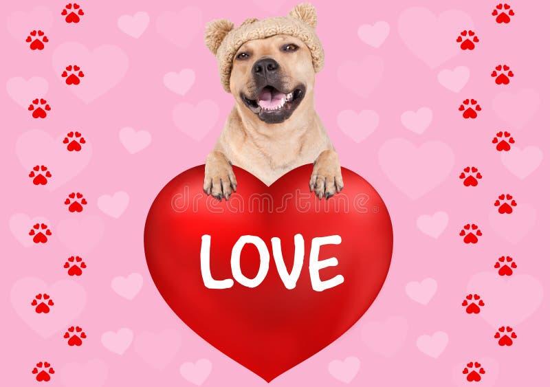 Симпатичная смертная казнь через повешение собаки с лапками на большом сердце дня ` s валентинки с влюбленностью текста на розово стоковое фото