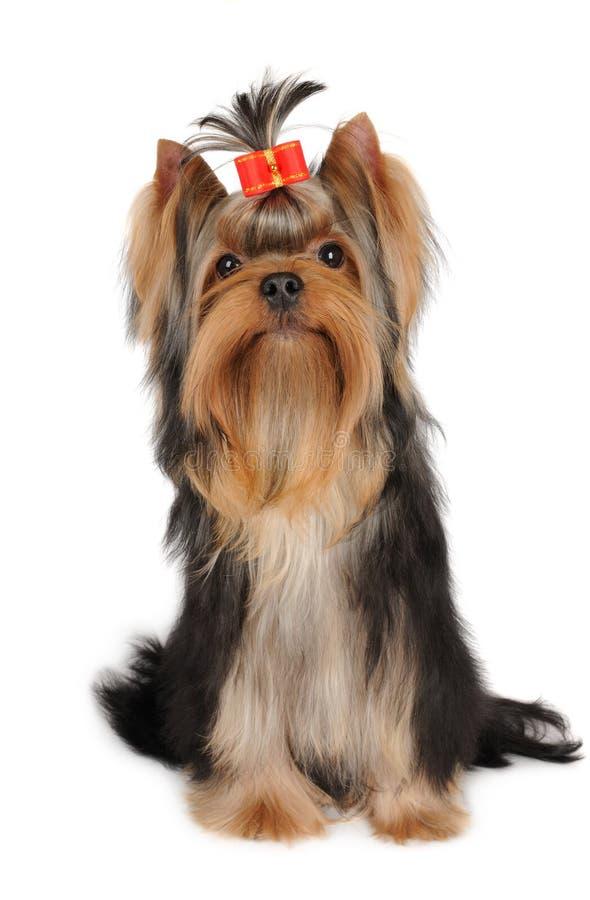 Симпатичная собака на белизне стоковая фотография rf