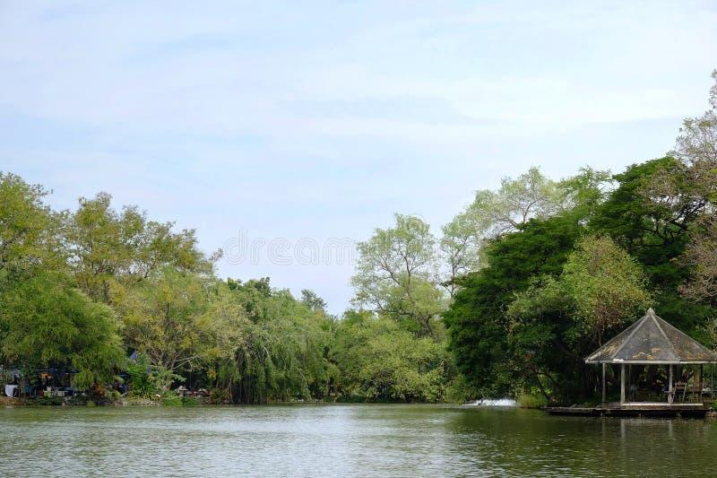 Симпатичное озеро стоковые фотографии rf