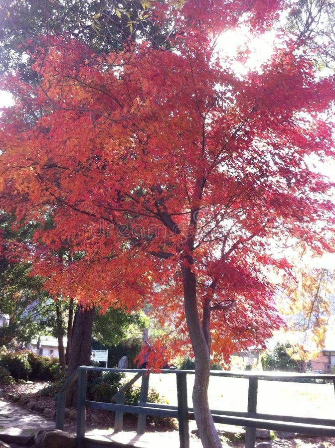 Симпатичные деревья зимы стоковые изображения rf