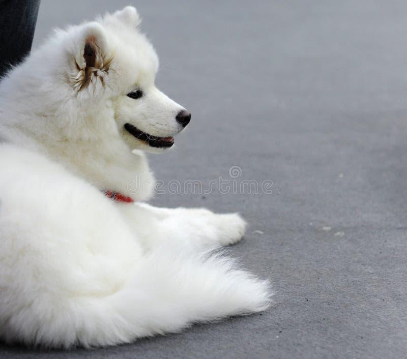 Симпатичные животные на выставке собак стоковое изображение rf