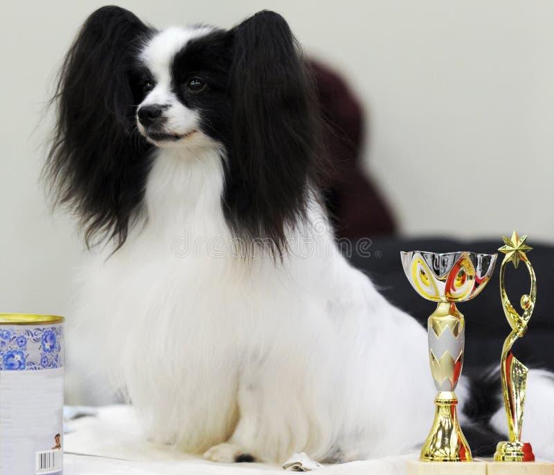 Симпатичные животные на выставке собак стоковое фото rf