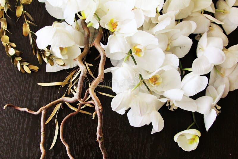 Симпатичные орхидеи стоковое изображение rf