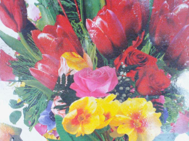 Симпатичные цветки естественные стоковое фото