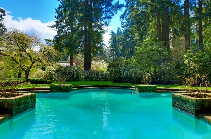 Симпатичный бассейн в саде в саде Lakewood стоковые фотографии rf